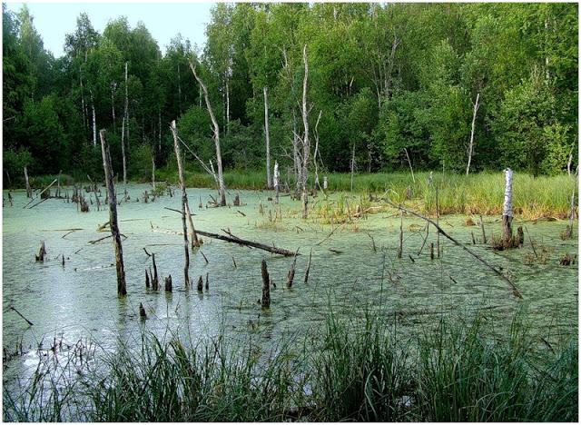 Задачка: Как отдохнуть на болоте.