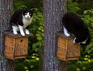 Задачка: кот и скворечник