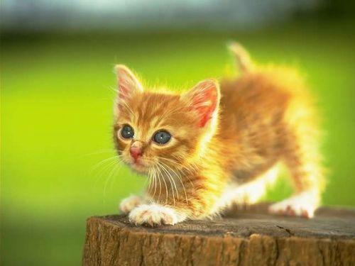 Головоломка: поймай кошку.