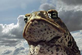 Задачка: Взрывающиеся жабы