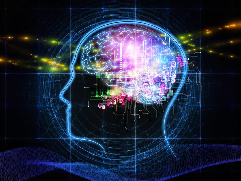 Можно ли сравнивать мозг с компьютером?