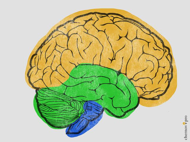 Эволюция мозга.