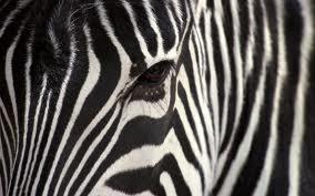 Задачка про зебру.