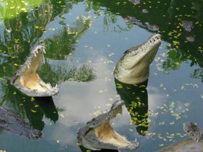 Задачка: В плену у крокодилов.